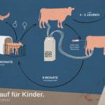 Infografik: Der Milchzyklus