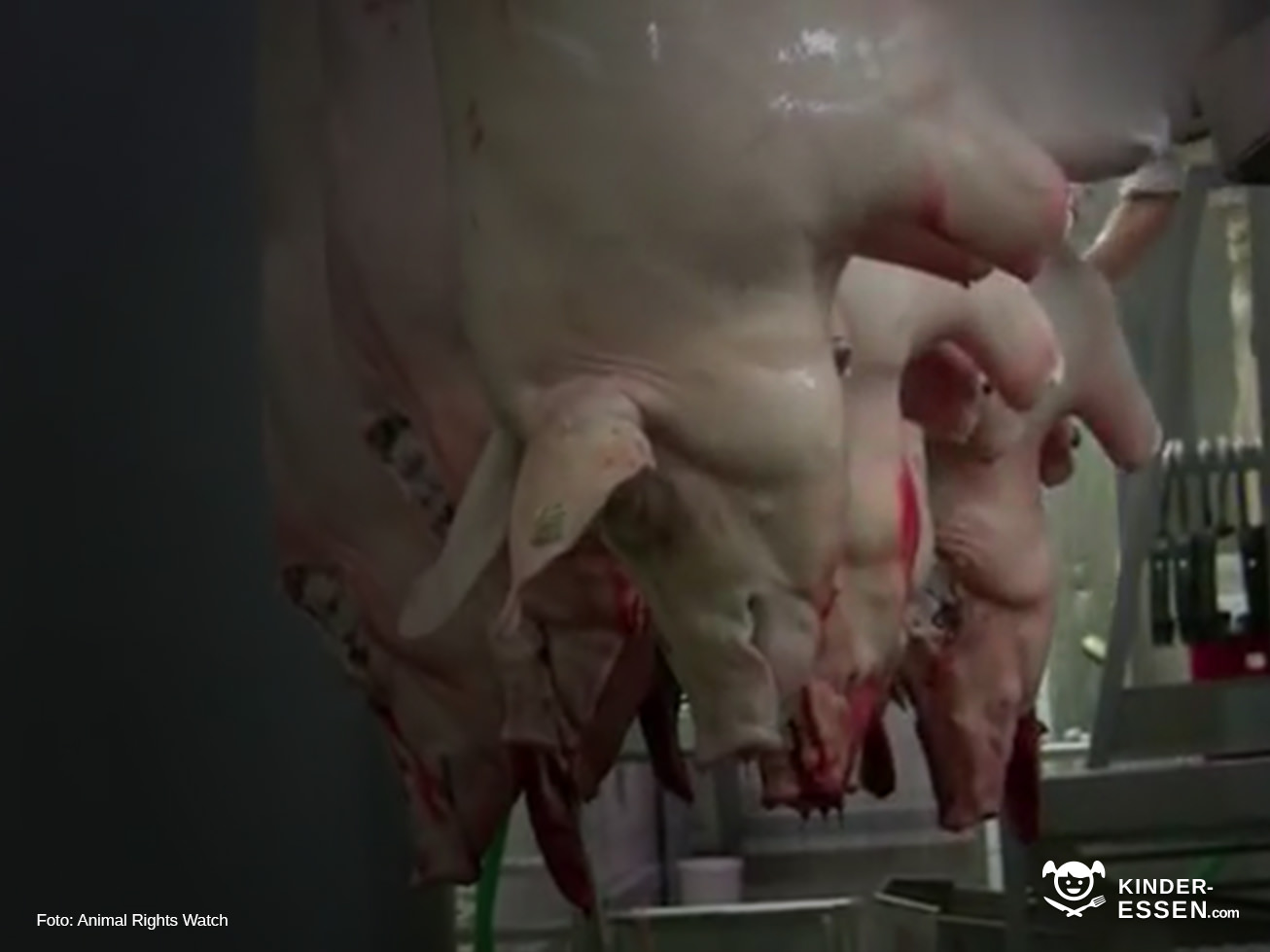 Bioschlachtung - wie Totstreicheln
